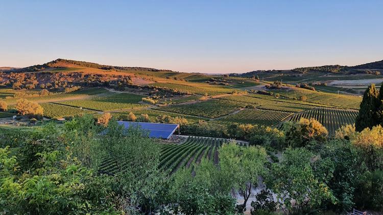 vignes limouxin aude occitanie